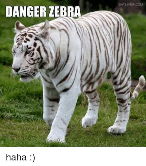 arkadaşlarını aslanlar yerken bonibon yiyen zebra