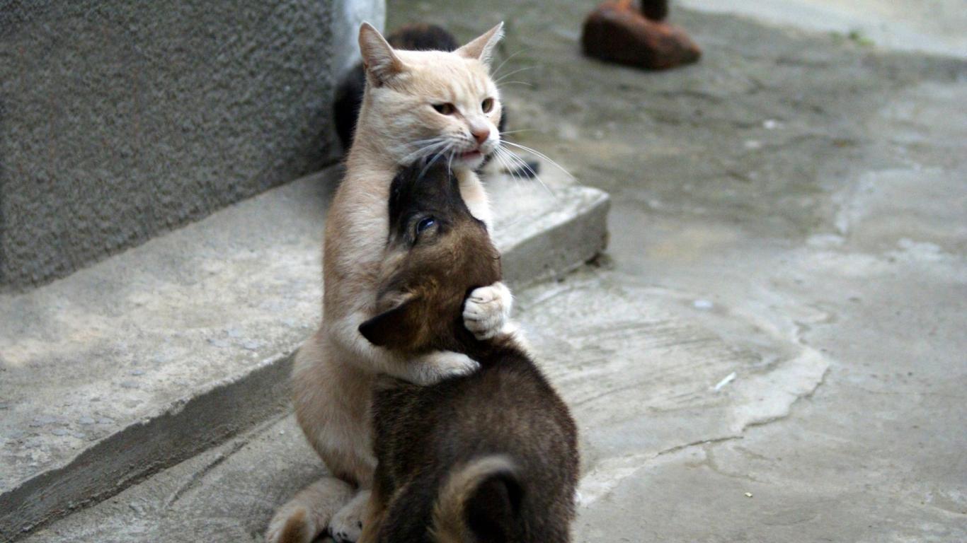 sarılmak