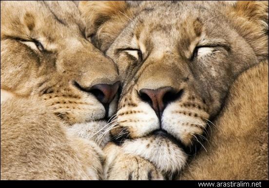sevgiliye sarılıp uyumak