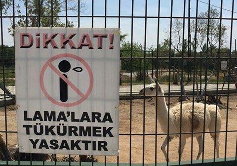 tedavisi olmayan türk hastalığı