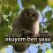 gamlı baykuş